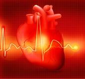 Cardiograma del corazón Fotografía de archivo libre de regalías