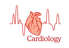 Cardiology concept with an ECG and heart. Cardiology concept with an ECG tracing of the heart beat and heart in a healthcare and medical concept Royalty Free Stock Photos