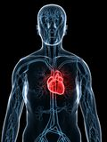 Cardiovasculair systeem vector illustratie