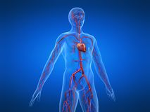 Cardiovasculair systeem royalty-vrije illustratie