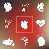 Cardiovasculaire systeemrug royalty-vrije illustratie