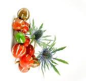 Cardo con los pepinos ornamentales Fotografía de archivo