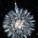 Cardo de wishs imagen de archivo libre de regalías