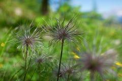 Cardo do outono que floresce nas montanhas Fotografia de Stock Royalty Free