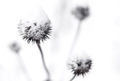 Cardo en invierno Fotos de archivo libres de regalías
