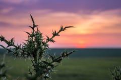 Cardo no campo no fundo do céu durante o sol fotografia de stock royalty free