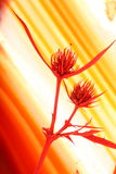 Cardo secado en la ágata Imagen de archivo libre de regalías