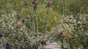 Cardo selvatico ed altre erbe stock footage
