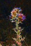 Cardo selvatico nella luce infrarossa Fotografie Stock Libere da Diritti