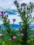 Cardo y montañas Imagen de archivo