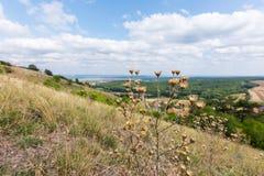 Cardos con paisaje del pueblo, del prado y del bosque cercanos foto de archivo