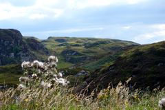 Cardos e montanhas escocesas Fotografia de Stock Royalty Free