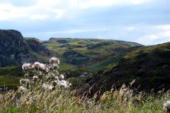 Cardos y montañas escocesas fotografía de archivo libre de regalías