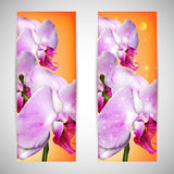Cards with a blossom orchid Stock Photo