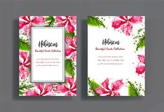 Cards design with hibiscus flowers stock photos