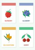 Cards with fresh berries. Vector illustration. Cards with fresh berries. Raspberry, blueberry, sea buckthorn and cherry stock illustration