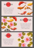 Cards with koi fish and lotus. Vector cards with koi fish and lotus, with copy space Royalty Free Stock Photography