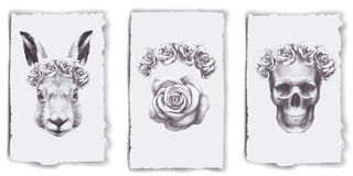 Cards with roses, rabbit and skull Royalty Free Stock Image