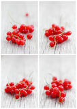 Cards Set of Red Currants Royalty Free Stock Images