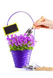 Care of basket with flowers Royalty Free Stock Photos