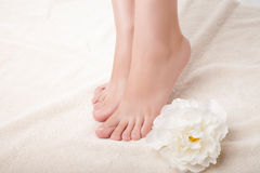 Care for beautiful woman legs Stock Image
