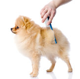 Care for dog hair Stock Photography