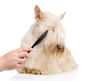 Care for dog hair. isolated on white background.  royalty free stock images