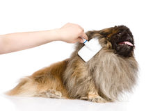 Care for dog hair. isolated on white background Stock Photography