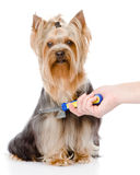 Care for dog hair.  on white background Royalty Free Stock Photos