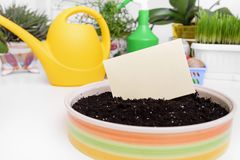 Care of domestic plants. Business card. Care of domestic plants. Horticulture services. Business card Stock Photography