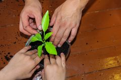 Care for the environment. plant in a pot, a little scattered earth around. seedlings, planting stock image