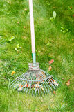 Care for green lawn by old rake. In summer day royalty free stock photo