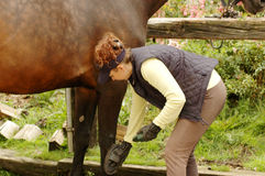 Care for the horse Stock Photography