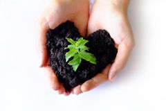 Care and Love. Love concept of hands growing and taking care for a young plant Stock Photo