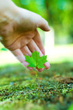 Care for nature. Hand shows a small maple tree. care for nature concept Stock Photos