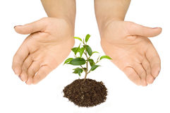 Care about new life Royalty Free Stock Images