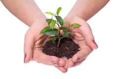 Care about new life Stock Photos