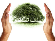 Care and protection of environment Stock Photography