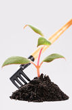 Care for seedlings stock photo