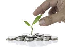 Care tree on pile of coins growing with hand   on white. Background Stock Photo