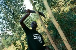 A CARE volunteer working on an agricultural project, Rwanda Royalty Free Stock Photo