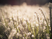 Care for your frozen lawn. Photo shows a frozen lawn back light Royalty Free Stock Images