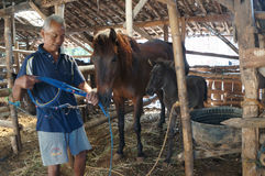 Cared for horses. Farmers are being cared for horses in the city of Solo, Central Java, Indonesia Royalty Free Stock Photo