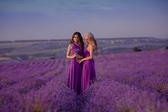 Carefree two beautiful women enjoying sunset in lavender field. Harmony. Attractive blond and brunette with long curly hair style royalty free stock photo