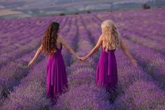Carefree two women hold hands enjoying sunset in lavender field. Harmony. Back view of Attractive blond and brunette with long stock photography
