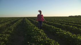Carefree young girl running at sunset at strawberry field in slow motion stock video footage