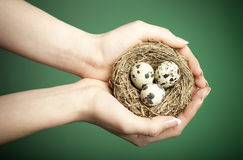 Careful hands. Careful female hands holding a bird nest with 3 eggs. Conceptual enviromental image royalty free stock photo