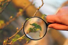 Careful inspection of green spaces. Gardener hand with magnifying glass on a background of blurred outlines of the bushes in the garden stock photo
