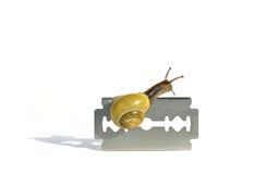 Careful snail. Snail creeping over a razor blade Royalty Free Stock Photo