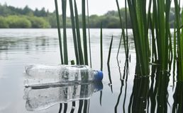 Discarded plastic bottle floating in a lake. A carelessly discarded plastic water bottle floats amongst reeds in a lake stock images